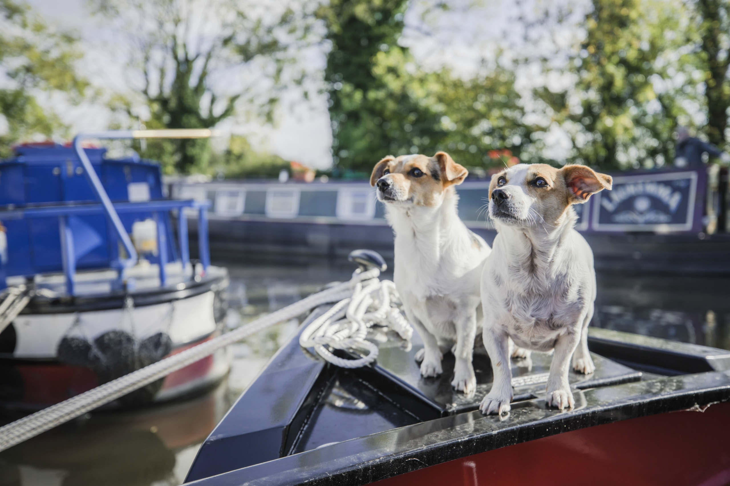 Canal boat holidays are great for pets